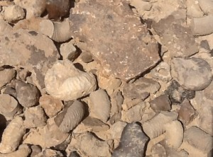 Lots of fossils.