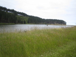 Inlet near Palmerston.