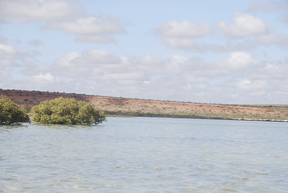 Mangroves in Herald Bight.