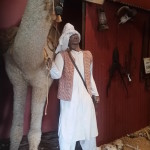 Camel at Balladonia Museum.