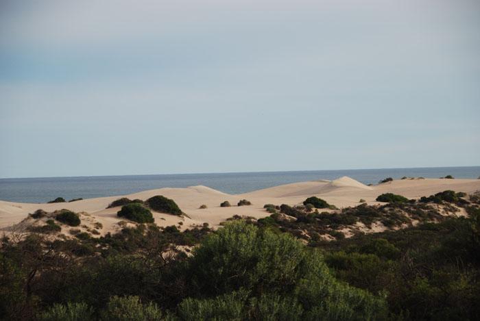 Coastal dunes.