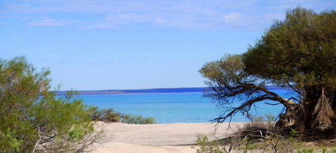 Hamelin Pool.