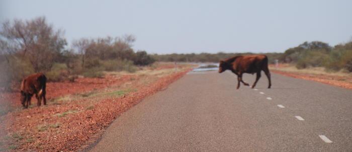 On the Nanutarra-Tom Price Road.