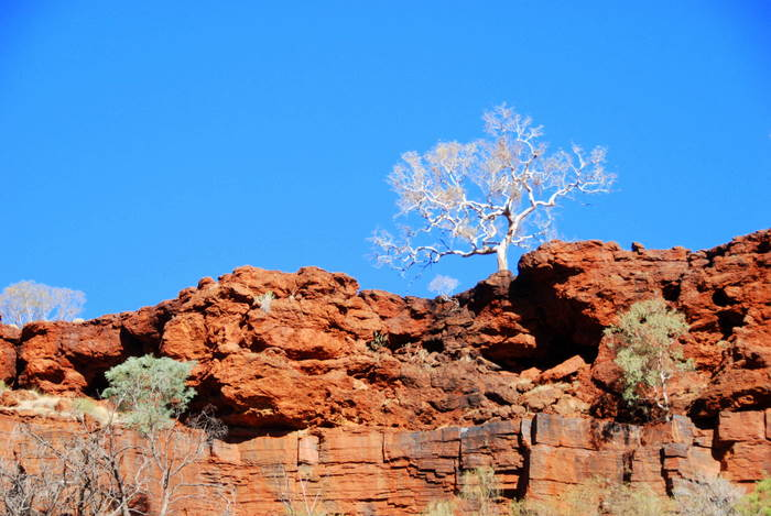 From the floor of Dales Gorge