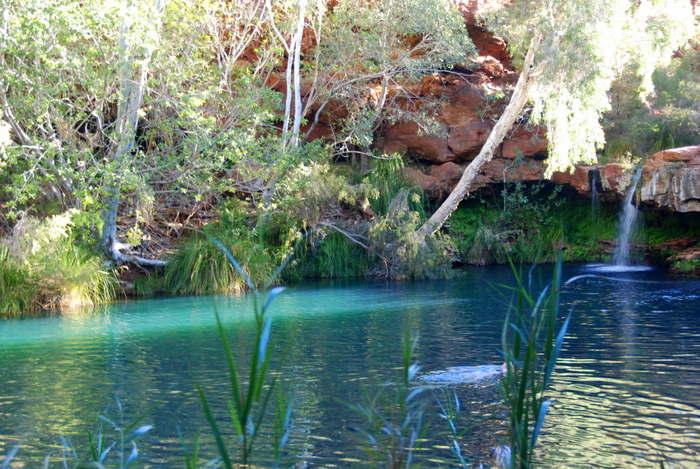 Fern Pool