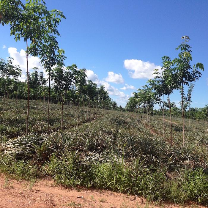 Si Chiang Mai farm