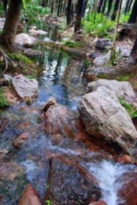 Zebedee Springs - a Wonder of the Kimberley.