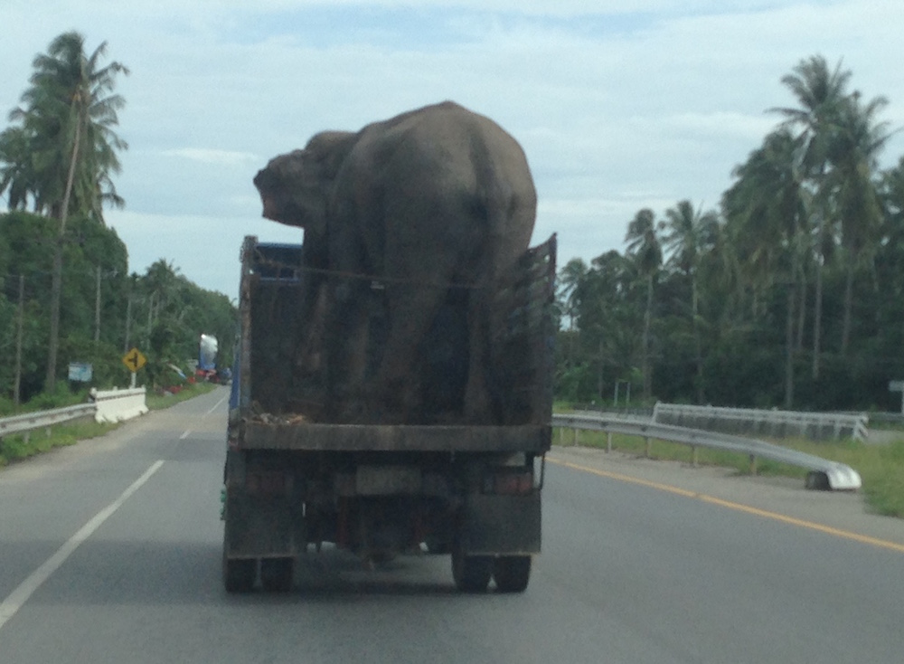 When you need to transport an elephant.