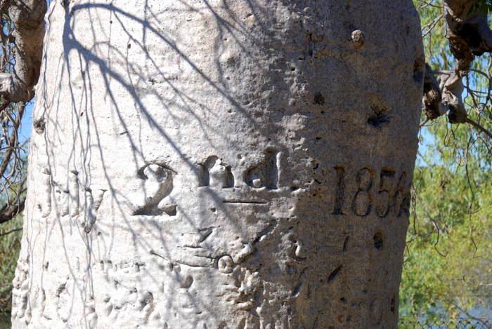 Date on tree.
