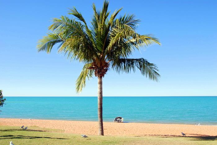 Palm tree at town beach.