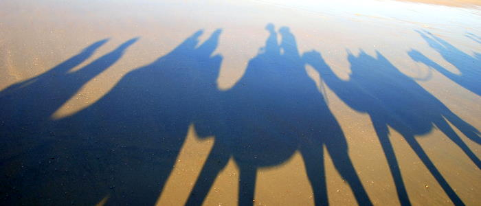 Camel shadows.