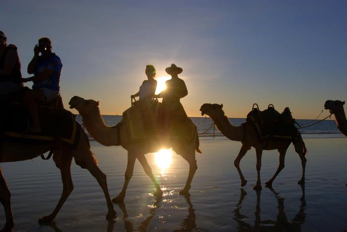 Camels at sunset.