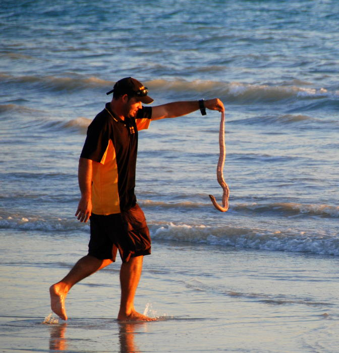 Sea snakes are often washed up on the beach.