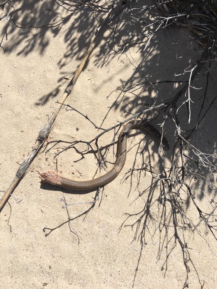 Half a snake.