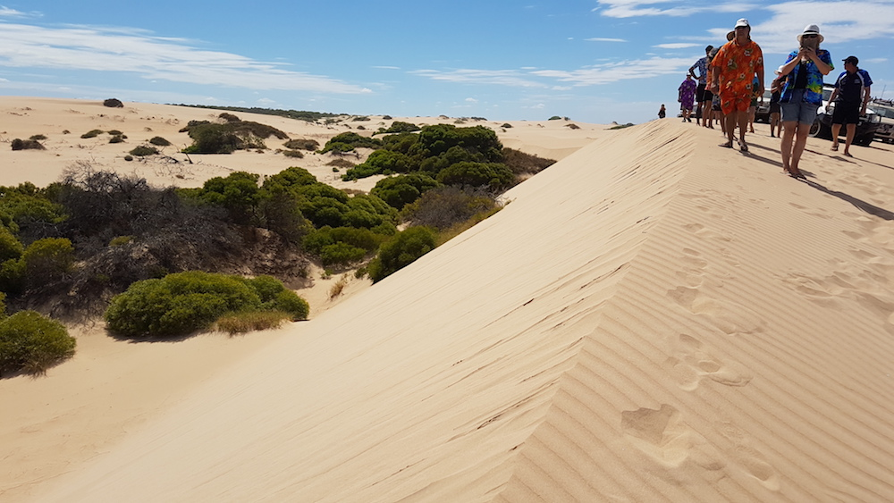 High ridge dune north of Horrocks.