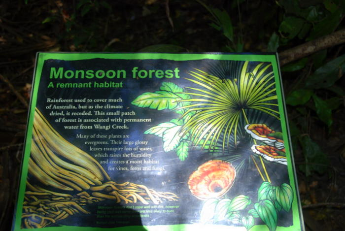 Information about the monsoon forest at Wangi pool