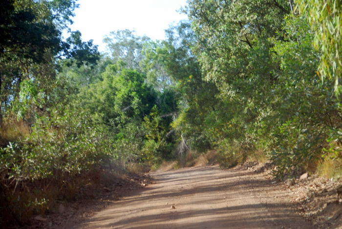 Track into Cooinda.