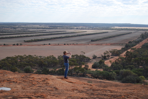 Andrew on top of Elachbutting Rock. The rows of trees across the paddock in the background are part of a farming practice known as 'alley cropping '.