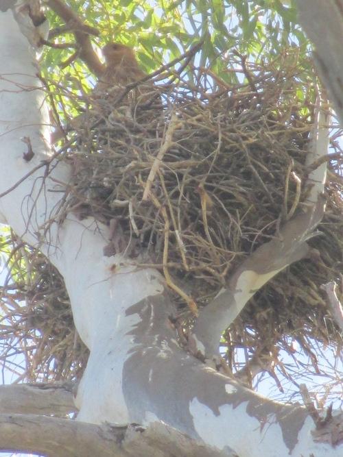 Nesting bird.
