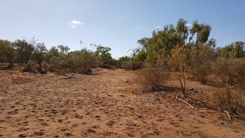 Looking up the Gascoyne River.
