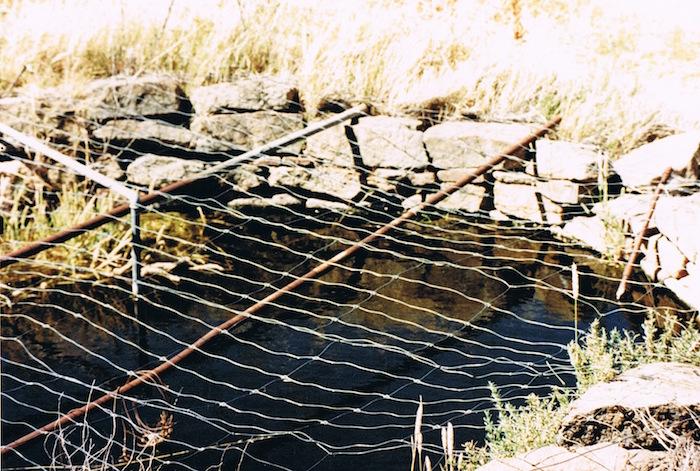 Marranobbing Spring December 1995.