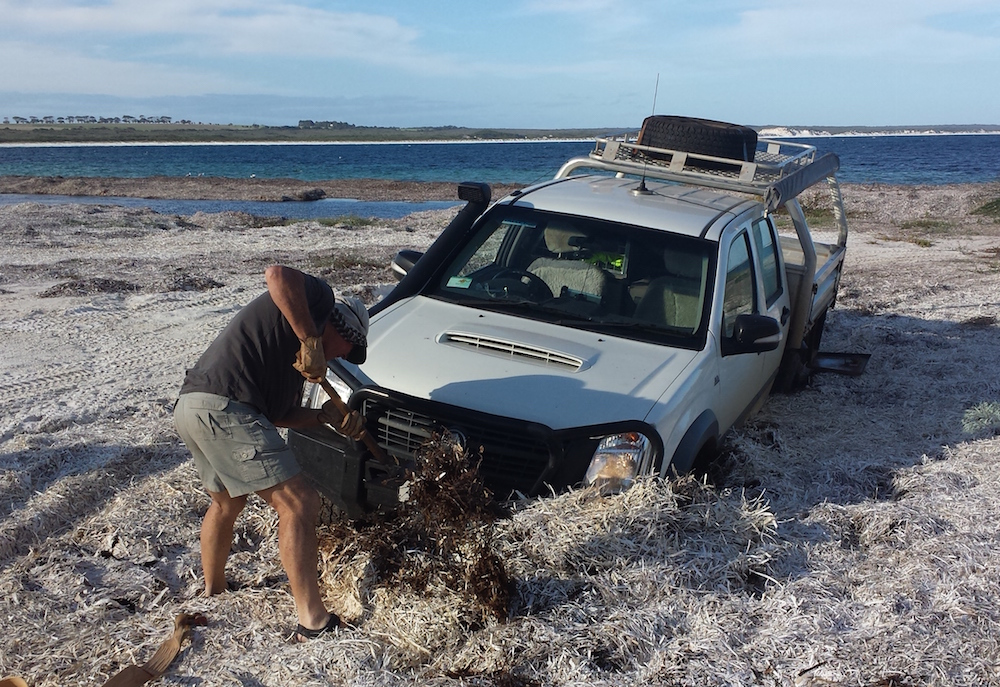 Bogged in seaweed on Dailey River Beach.
