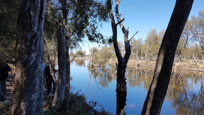 Lake Toolibin is looking beautiful now.