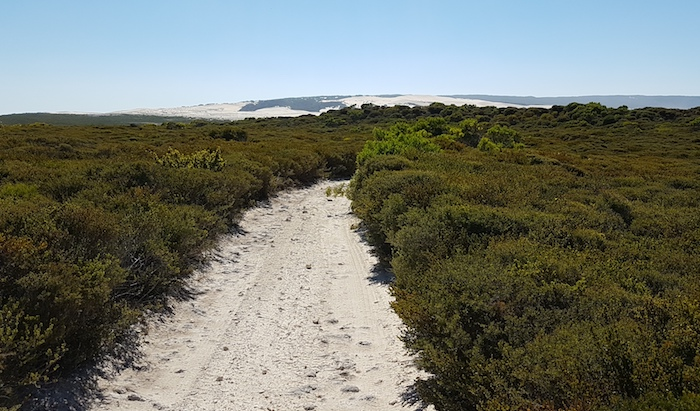 Dunes can be seen once over hill on Reef Beach track.