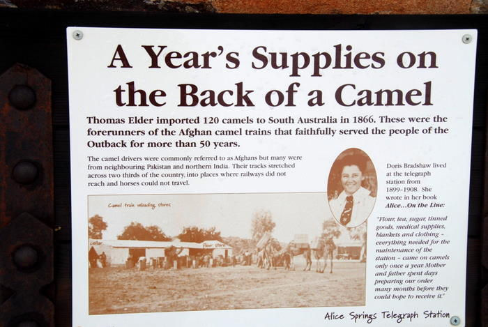 Camels and supplies.