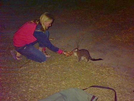 Leah feeds a possum.