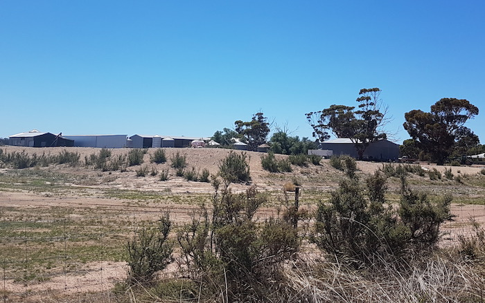 A model of an elephant has been placed on a dam at this property on Bilericay Road, Bendering.