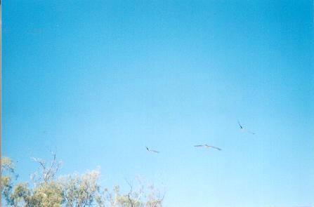 Bird Identification 101 (still not eagles).