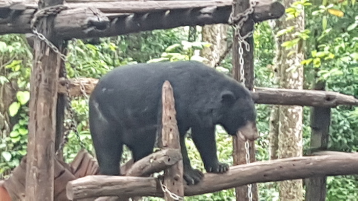 More than 200,000 tourists pass the Bear Rescue Centre on their way to (or return from) the famous Kuang Si waterfall.
