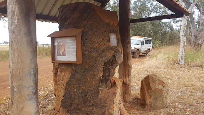 At the Gregory survey tree on Gibbs Road, Condinup.