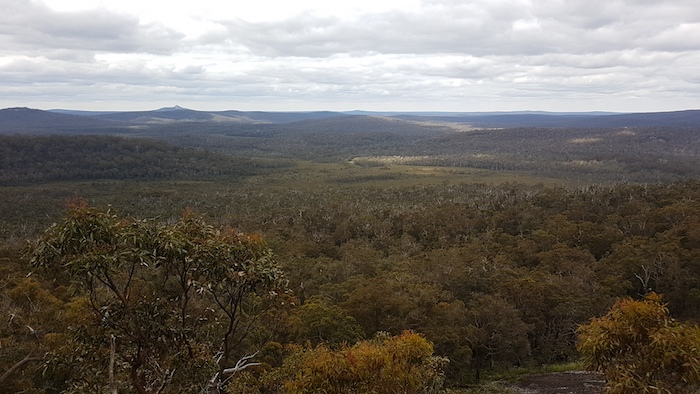 The view north from the Lookout over the Walpole Wilderness.