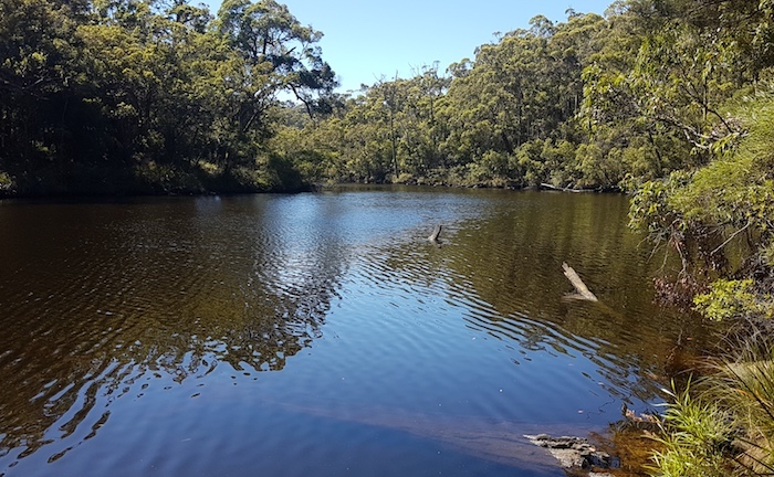 Frankland River from Tingle Drive vantage point.