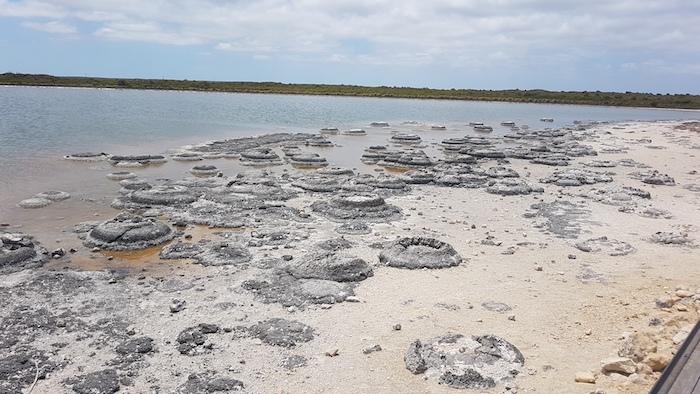 Stromatolites at Lake Thetis, Cervantes.