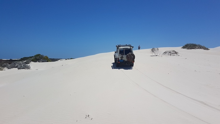 Mushy went exploring on the dunes north of Gum Tree Bay.