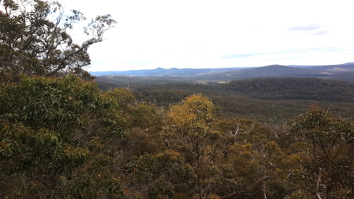 View of the Walpole Wilderness from the Lookout.