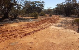 Wheel tracks leading out of our campsite on the last night of the Outback Trek in August 2020.
