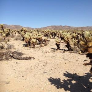 Acres of cacti.