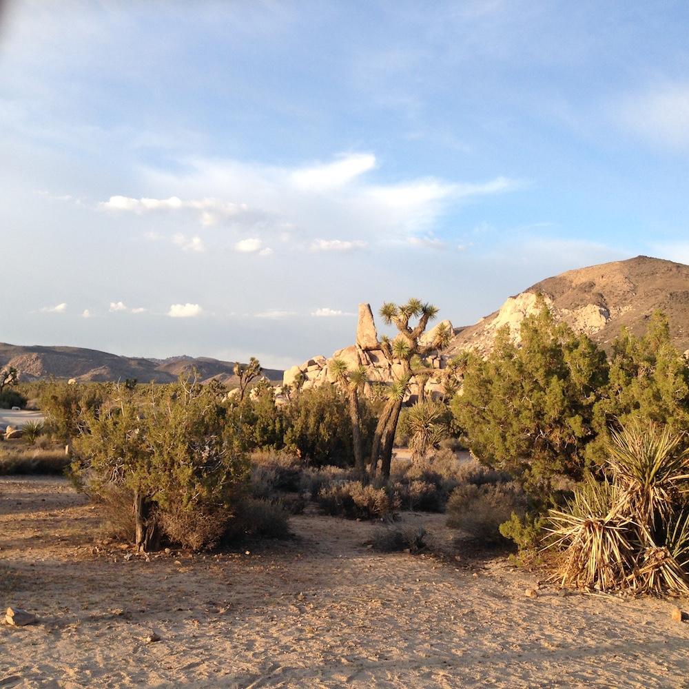 Part of the Mojave Desert.
