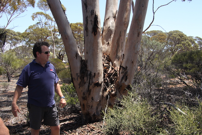 Scotty explain regrowth