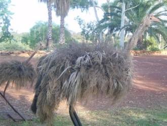 Steel emus