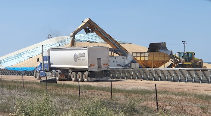 Loading wheat for road transport at Burracoppin, incongruously from a railway siding.